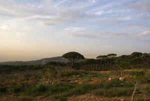 kfarmatta mount lebanon