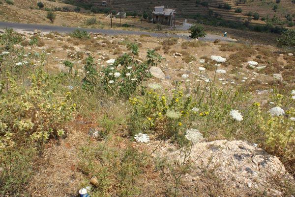bhamdoun land sale lebanon