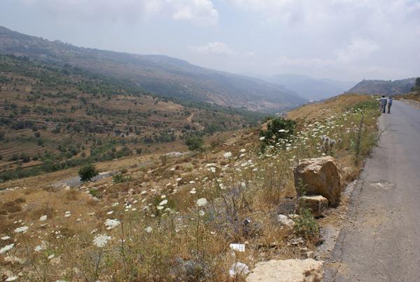 bhamdoun land 4 sale lebanon