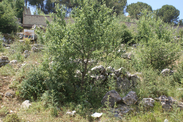 aley lebanon land for sale vacant