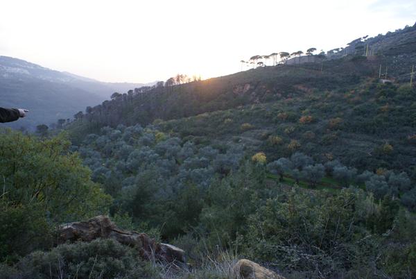 kfarmatta land olive trees